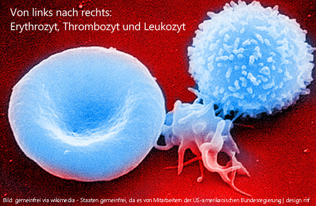 Thrombozytopathie